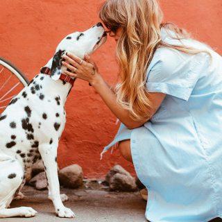 Prevención Enfermedades Animales Compañía - COLVEPA